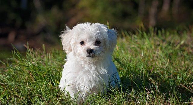 Médicaments pour chien : les conseils pratiques pour les maîtres